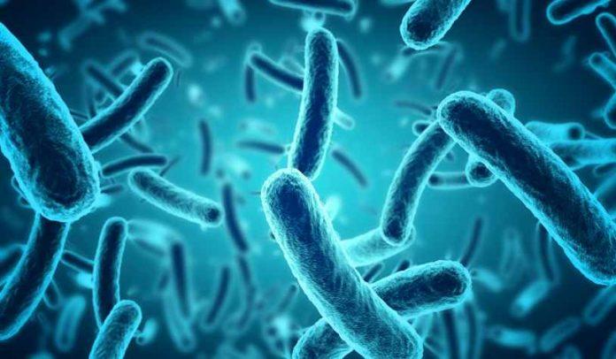 Prevenir la Salmonelosis - Prevenir la Salud de la Salmonelosis