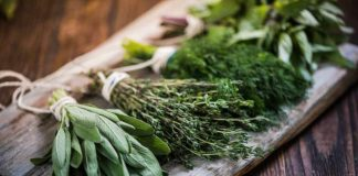 Plantas Medicinales - Plantas que Curan Medicinales