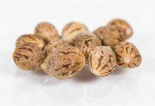 Semillas de Marihuana - Beneficios de las Semillas de Marihuana