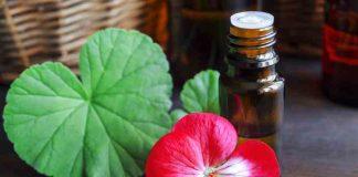 Aceite de Geranio - Beneficios de Aceite de Geranio