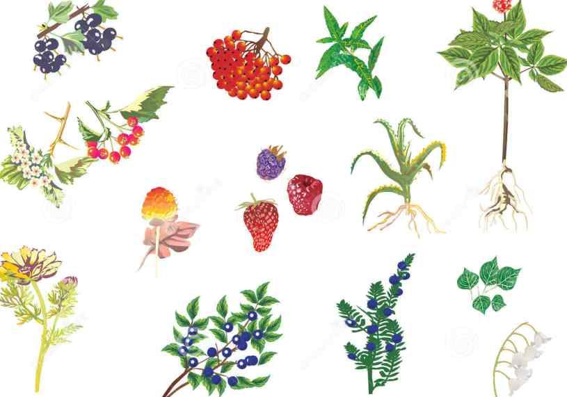 Plantas Medicinales Adelgazar - Adelgazar con Plantas Medicinales