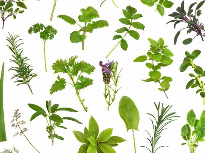 Beneficios de las Plantas Medicinales para la Salud