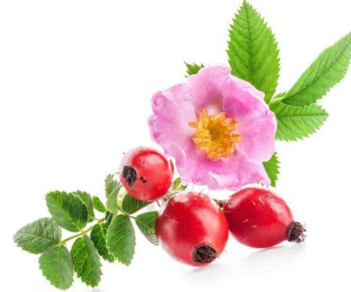 Beneficios de la Rosa de Mosqueta - Rosa de Mosqueta