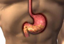 Metabolismo en el Cuerpo - Metabolismo Conocer