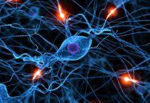 Endorfinas Combatir el Estrés - Endorfinas Combatir la Depresión
