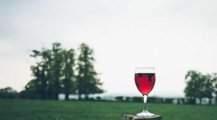 Degustar el Vino - ¿Cómo Tenemos que Degustar y Apreciar el Vino?