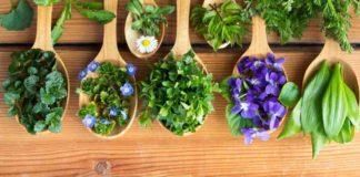 Plantas Medicinales Dolencias que Pueden Aliviar