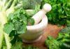 Plantas Medicinales para Diferentes Dolencias