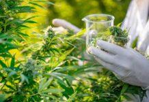 Beneficios para la Salud al Consumir Marihuana