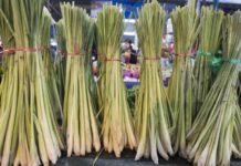 Beneficios Probados del Aceite Esencial de Hierba de Limón