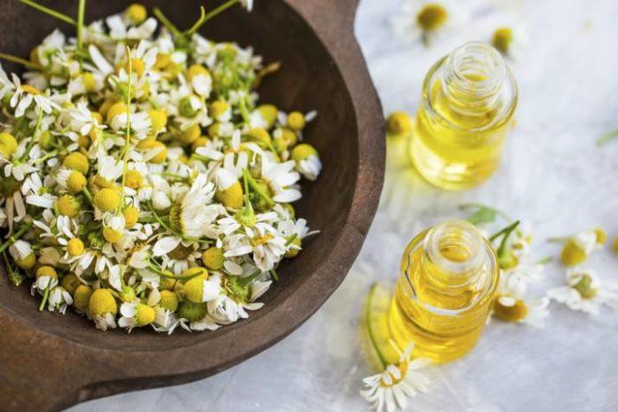 Beneficios para la Salud de la Manzanilla Romana