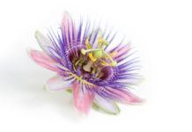 Beneficios de la Pasiflora para mejorar la Salud