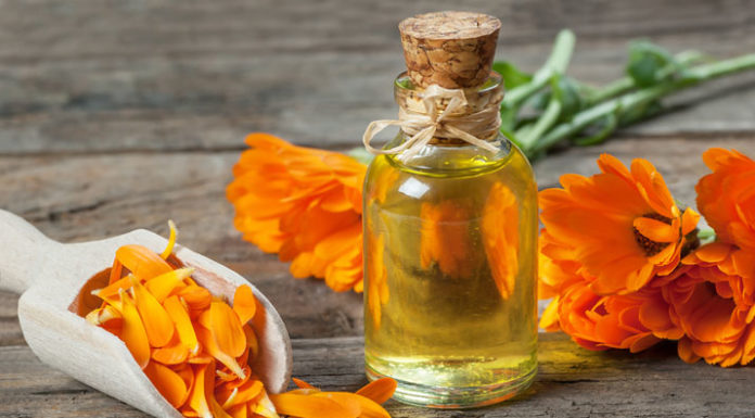 Cultiva Caléndula para tu Jardín Orgánico