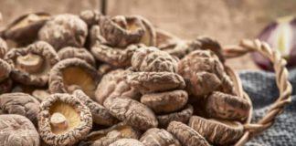 Beneficios para la salud de la Shiitake o Lentinula Edodes