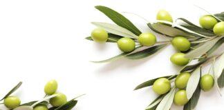 Propiedades de las Aceitunas - Beneficios de las Aceitunas
